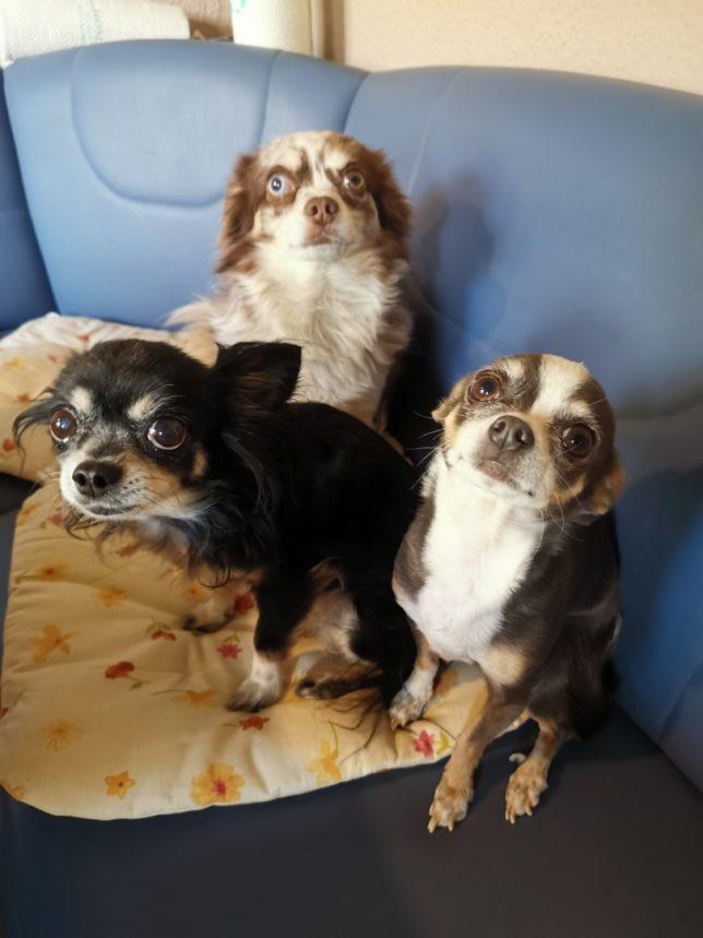 Beverly, Maja und Micky