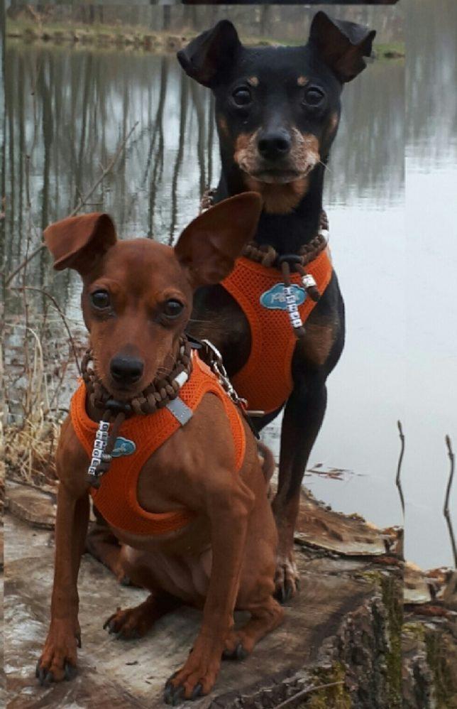 Benji und Ginger