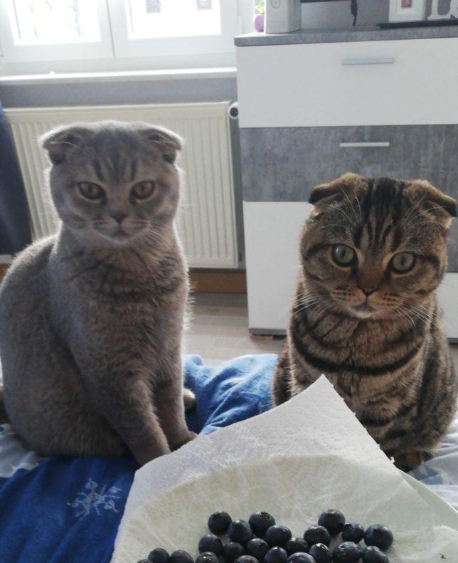 Sammy & Tiger