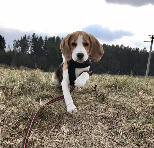 Benny aus Hollfeld