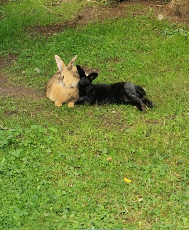 Brownie & Blacky ♥️ aus Weidenberg