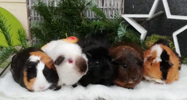 Chilli,Bärchen,Freddy,Lilly,Fanny aus Heinersreuth