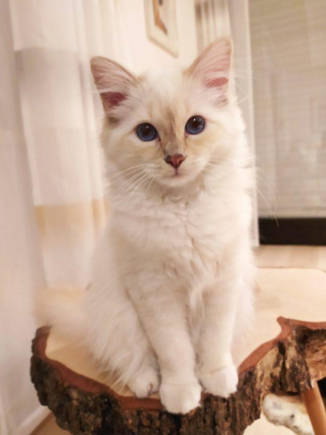 Cleo aus Pottenstein