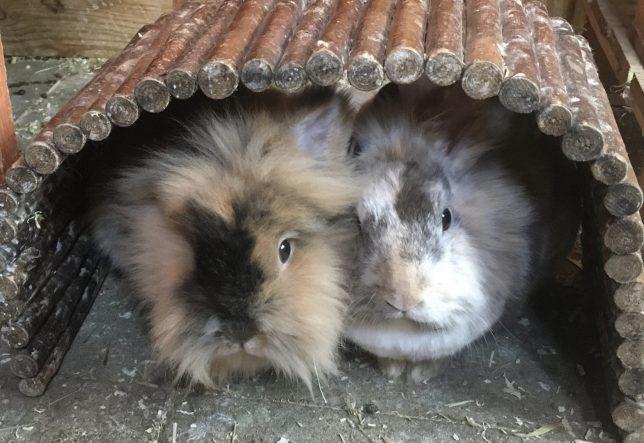 Flecki und Puschel aus Bayreuth